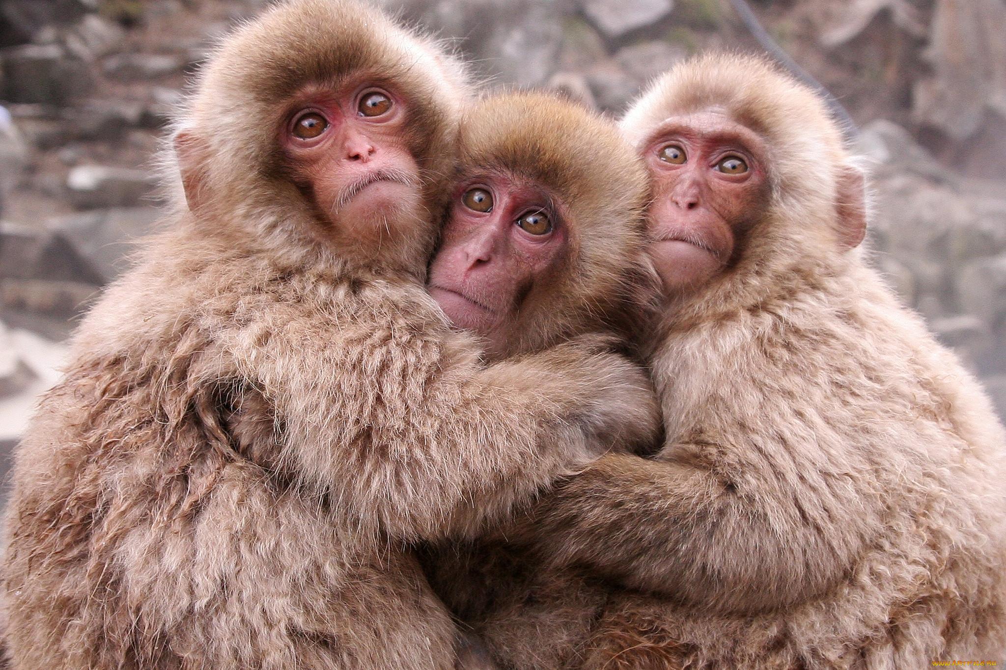 картинки где три животных смешные она